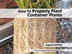 How to properly plant container plants