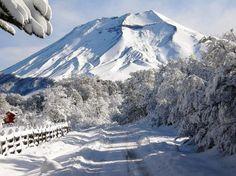 Lonquimay Volcano, Araucanía Region, Chile.