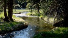 Фото: Лесная речка