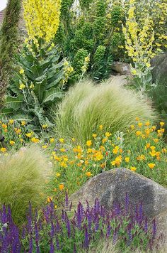 This one combines California Poppy with salvia and some others. Dry Gardens in England, Dry Garden at RHS Hyde Hall Gardens, Essex, UK Perennial Grasses, Drought Tolerant Plants, Ornamental Grasses, Perennials, Dry Garden, Gravel Garden, Garden Landscaping, Prairie Garden, Meadow Garden