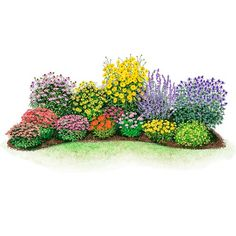 New Plants - Drought Tolerant Garden