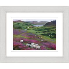 Buy Debbie Neil - Heather Sheep Framed Print, 47 x 57cm Online at johnlewis.com