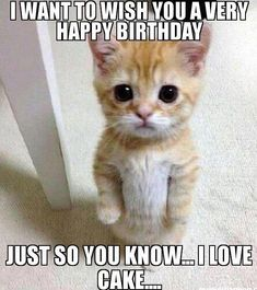 List of best and funny happy birthday aunt meme images, wishes, greeting. Impress your auntie with amazing birthday funny SMS and text lines. Funny Animal Quotes, Animal Memes, Funny Animals, Cute Animals, Funniest Animals, Funny Quotes, Funny Shit, Funny Cat Memes, Funny Cats