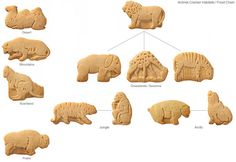 Give students each a handful of animal crackers and divide as to Habitat and foodchain where applicable.