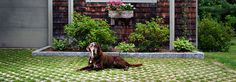 Turfstone Pavers: Turfstone Brick Pavers & Patio Pavers by Belgard.  I need this with the Wolfhounds.