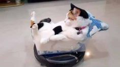 Looking as if it has no care in the world, this cat's mode of transportation has us all wishing we could do the same.