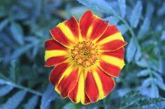 """Flower"" by abdullahalhejji! Find more inspiring images at ViewBug - the world's most rewarding photo community. http://www.viewbug.com/photo/46282261"