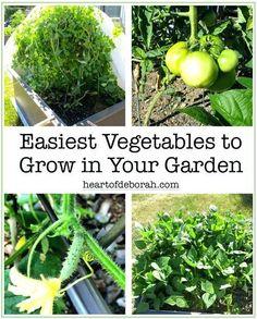 good beginner garden vegetables 5 easiest vegetables to grow in your beginner garden heart of best beginner garden vegetables #vegetablesgardening #vegetablegardening