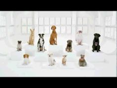 I just might have to buy a VW now! Volkswagen is at it again with its Star Wars-inspired Super Bowl commercials. Enjoy this hilarious teaser commercial of a dog chorus barking the Imperial March. War Dogs, I Love Dogs, Puppy Love, Cute Dogs, Awesome Dogs, Volkswagen, Darth Vader, Super Bowl, Vw Commercial