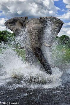 Washing tha' trunk.