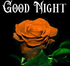 Good Night Images with flowers and nature - PIX Trends Sweet Good Night Images, Sweet Dreams Images, Good Night To You, Photos Of Good Night, Good Night Sweet Dreams, Red Rose Images Hd, Happy Akshaya Tritiya Images, Happy Karwa Chauth Images, Good Night Wallpaper