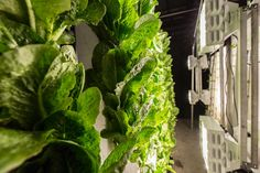 Hydroponics coupled with vertical growing techniques reduces the space required to meet food demand, reduces water used for agriculture, and allows produce to be grown locally even in densly-populated urban areas. Vertical Farming, Urban Farming, Hydroponics, Agriculture, Gardening, Factories, Classroom, Sign, School