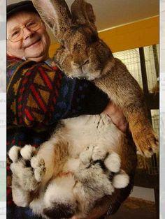 "BIGFOOT ""bunny"""