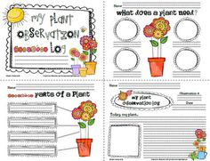 Sailing Through 1st Grade: Plant Observation Log for the Primary Grades