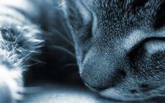 gatto-addormentato