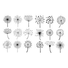 Illustration about Dandelion Fluffy Seeds Flowers Hand Drawn Doodle Style Black And White Drawing Vector Icons Set. Illustration of hand, doodle, fluffy - 70180632 Doodle Drawings, Doodle Art, Doodle Frames, Flower Doodles, Doodle Flowers, Hand Doodles, Floral Doodle, Black And White Drawing, Black And White Doodle