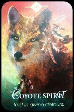 Animal Spirit Oracle ~Collette Baron Reid ~Coyote Spirit ~ Trust in divine detours 😇 . Animal Meanings, Animal Symbolism, Animal Spirit Guides, Spirit Animal, Coyote Animal, Oracle Tarot, Oracle Deck, Fox Totem, Archetypes