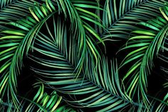 Jungle palm leaves. Tropical pattern by mystel on @creativemarket
