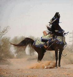 Arabian Horse ~ This amazing photo is right before the full rear up! Beautiful Arabian Horses, Most Beautiful Horses, Majestic Horse, All The Pretty Horses, Beautiful Creatures, Animals Beautiful, Cute Animals, Zebras, Horse Costumes