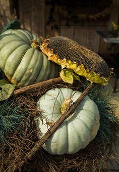 pumpkins sunflower from terrain