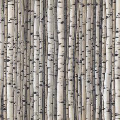 Birch Countryside Woods - Blank Quilting - .75 yard - Last Available by BywaterFabric on Etsy