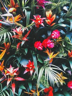 PALM COLORFUL TUMBLR - Chelsea In Bloom
