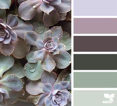 { succulent hues } image via: @wild_rubus