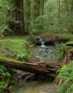 ... the creek.