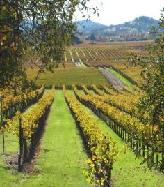 Loved Napa! One of the best places for foodies to visit.
