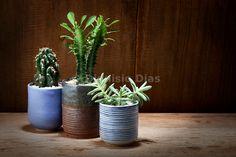 Vasos decorativos de suculentas e cactos
