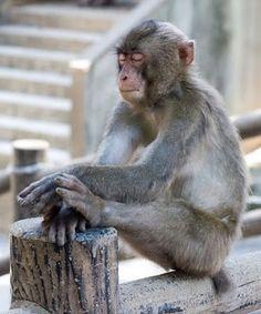 Cute Animals Praying monkey prayer