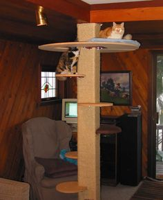 Neat idea.....DIY cat tree... I like this one for a small space because the big part is high.