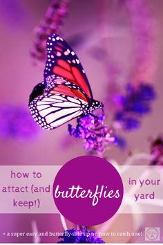 Having butterflies in your garden is fun for everyone. Here are the plants you need to attract and keep butterflies in your yard, plus an easy no-harm way to catch them.