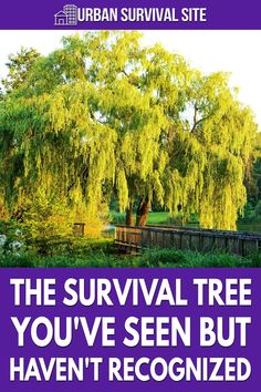 Survival trees offer significant options in any survival situation, and there's a very common one that you probably haven't noticed.