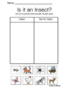 Animals- Insects, Mammals, Oviparous and Nocturnal Animals FREE