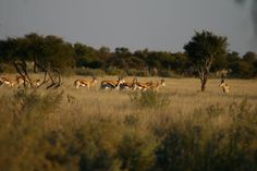 Central Kalahari Vineyard, Africa, Places, Travel, Outdoor, Outdoors, Trips, Traveling, Outdoor Games
