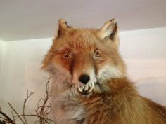 This is Taxiderpy - Imgur