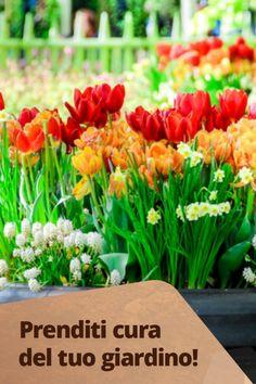 Chi ha detto che non si possono piantare i bulbi in vaso? Pur invidiando quei bellissimi giardini che si vedono sui social possiamo sempre riempire di bulbi i vasi e le fioriere di terrazze e balconi: ecco alcuni semplici consigli da mettere in pratica per poter godere di fioriture spettacolari. Garden Inspiration, Joy, Vegetables, Plants, Lasagna, Daffodils, Planting, Tulips, Glee