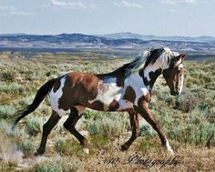 His etsy shop has the most beautiful photos of Wild Mustangs and handmade recycled frames......<3 The Dance of Picasso 8x10wild mustangPaint by Plustenphotosanfrmes, $15.00