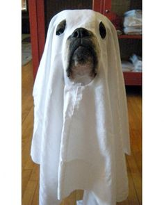 Ghost Dog Boxer