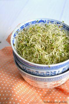 Tomate sans graines - Cuisine bio et green attitude !: Je fais germer mes graines... parce que les graines germées c'est bon et rigolo !