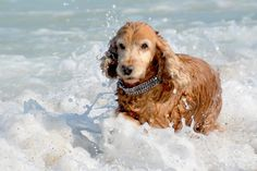 Relief for Gassy Dogs by Dr. Matthew Heller Many a pet owner has been offended by the intestinalsounds and smells emanatingfrom their favorite caninecompanion. How could your cuddly,four-legged...