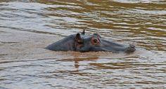 Aina se on mielessä: Safarilla Keniassa