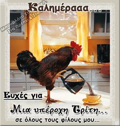 The perfect Rooster Morning WakeUp Animated GIF for your conversation. Discover and Share the best GIFs on Tenor. Gif Café, Animated Gif, Good Morning Good Night, Morning Wish, Good Morning Quotes, Good Morning Coffee Gif, Tag Youtube, Foto Gif, Coffee Time