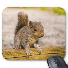 Cute Little Baby Squirrel Mouse Pad - outdoor gifts unique cyo personalize