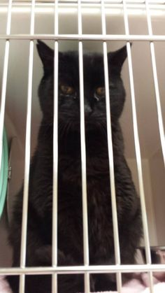 URGENT- FULL, WILL KILL FOR SPACE!!!!  PLEASE SOS TO ALL MY CAT LOVERS, THEY HAVE KILLED KITTENS AND CATS WITHIN THE PAST FEW DAYS, WE NEED TO SAVE THESE BABIES NOW! Marty // intake 5/28 . Adopt at Mercer Co Animal Shelter (Princeton, WV) 304-425-2838 or 304-425-2880. Stacey Martin is the rescue coordinator and rescues can reach her at 304-887-0614. Open Mon-Sat 12-6. Be sure to use ID# when calling about an animal. The adoption fee covers shots, worming, and neutering. 50$ for cats .