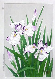 Iris-Shodo Kawarazaki