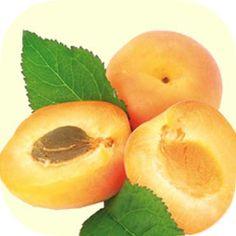 olio di semi di albicocca VOM FASS