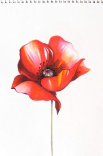 Red poppy, touch marker and pencil skech