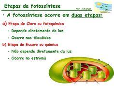 fotossintese - Pesquisa Google
